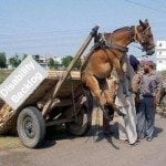 Democrats and the Disability Backlog Donkey
